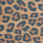 Imagem do Modelo